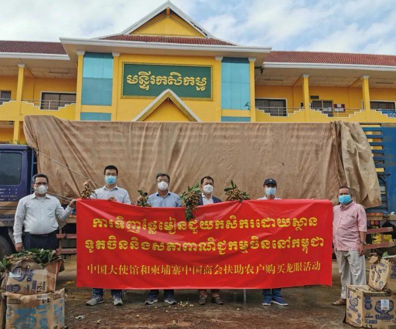 中国大使馆和中国商会收购柬埔寨滞销龙眼