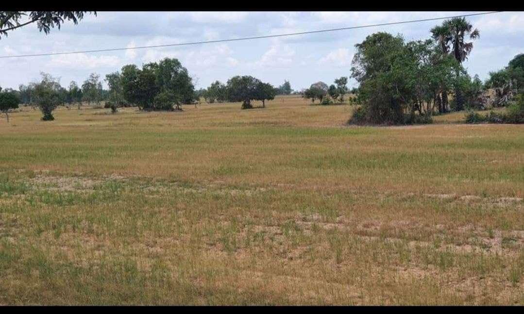 旱灾致农业领域5年损失1亿美元