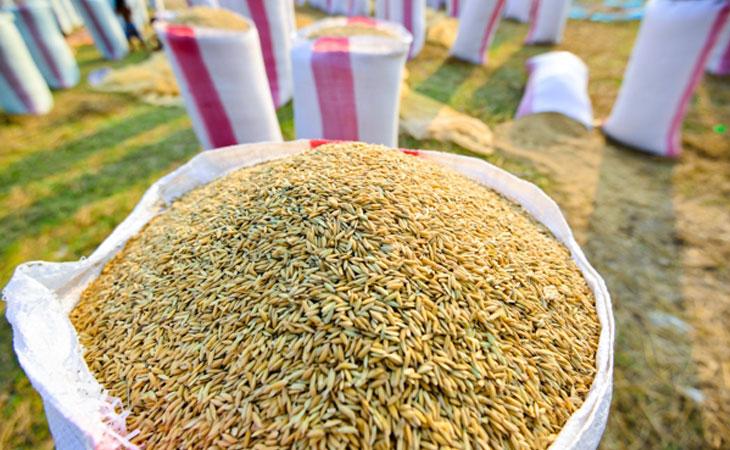 前9月柬大米出口量超41万吨